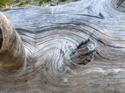 Big old dead tree