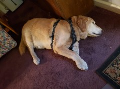 Sleeping in my office