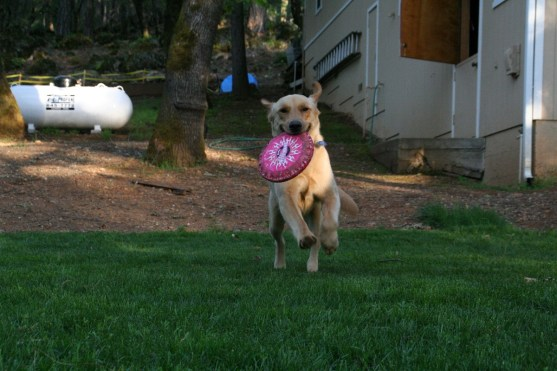 Loved his frisbee