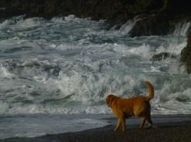 Wrights beach no fear