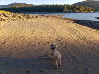 Charlie loves the sand