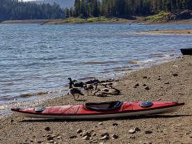 Geese and kayak