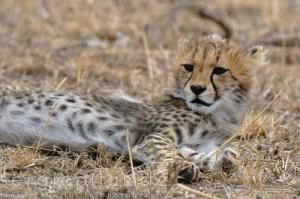 Viaggi in Africa 2012
