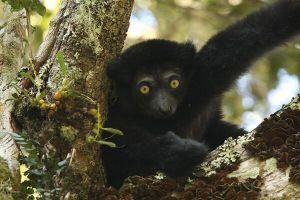 Italia contribuisce area protetta madagascar