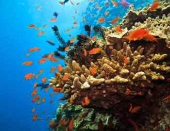 Australian Dive Adventures