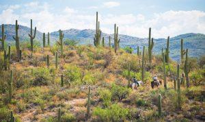 Real Arizona image Courtesy of the Arizona Office of Tourism