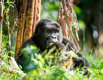 Safari Experience in Rwanda