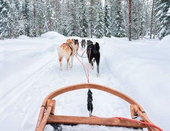 Winter Adventures in Alta