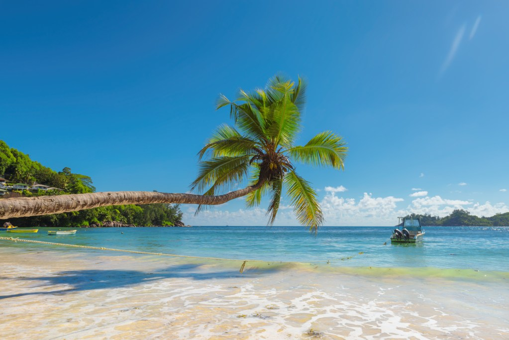 Coconut Palm trees on the sandy beach and beautiful sea in Bermuda.