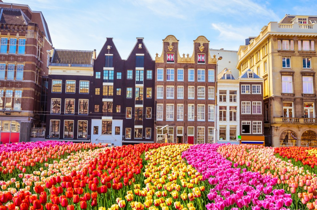 Traditional old buildings and tulips in Amsterdam