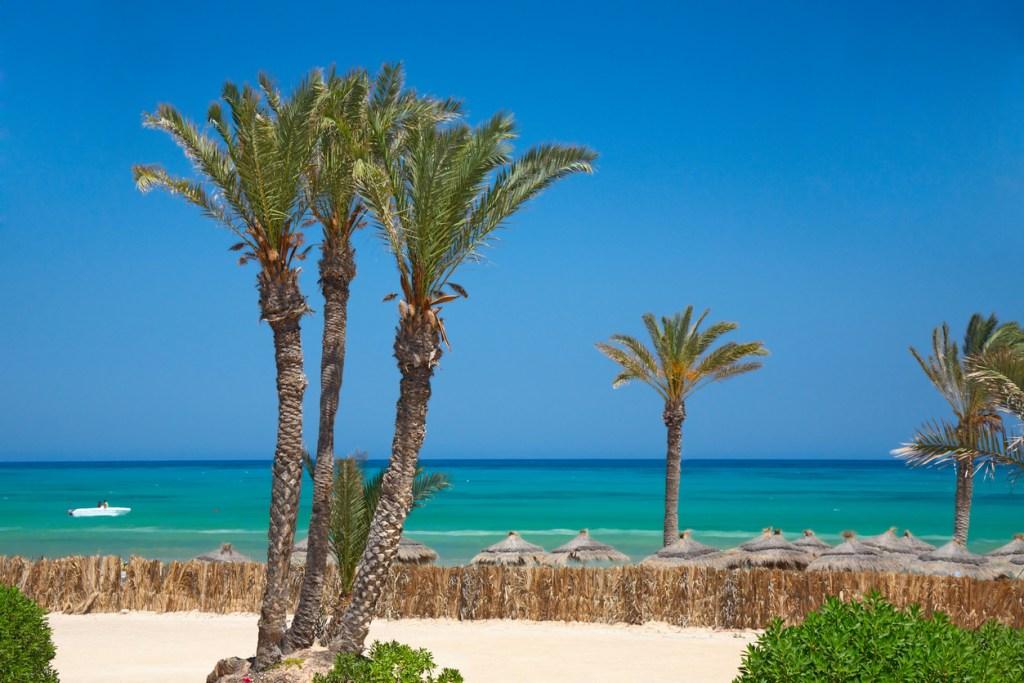 Thatched sunshades and palm trees, Tunisia, Djerba
