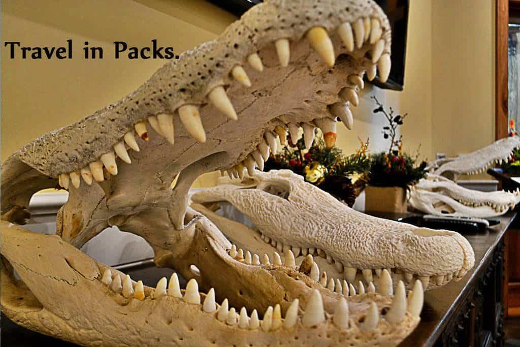 real-gator-packs