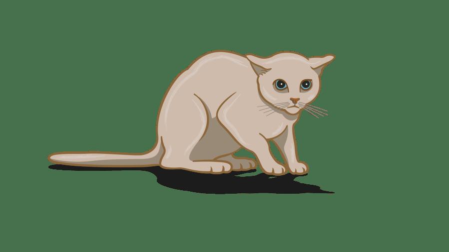 bahasa tubuh kucing cemas