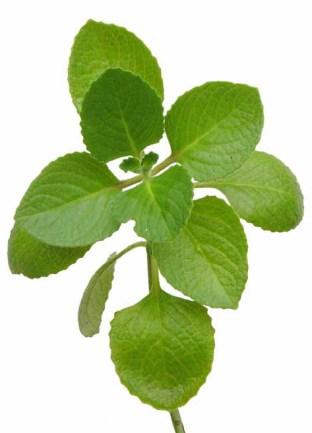 oregano-herb-benefits