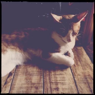 Miao Cat Cafe Kahel