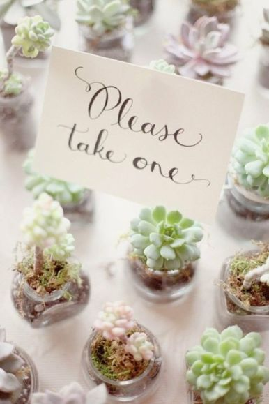 Wedding Favors Succulents