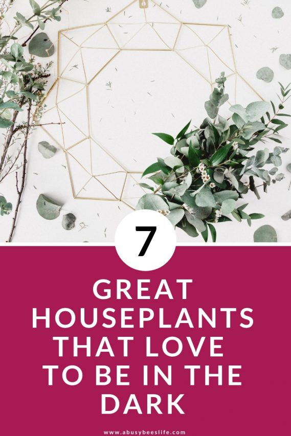 Have you experienced the frustration of having indoor plants die on you too often? I'm sure you'll love to hear about theseuncommon and low-maintenance houseplants that love to be in the dark. Click through to find out which ones they are. #plants #home #minimalism #indoorplants #hangingplants #DIY #potten #decor #photography