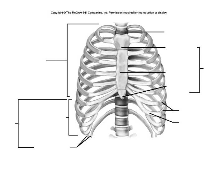 Thoracic Cage Labeling