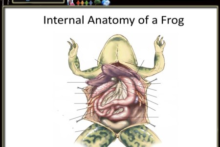 Interior Internal Frog Anatomy Diagram Electronic Wallpaper