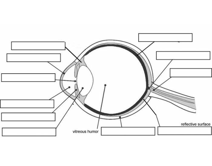 Label the Parts of the Eye