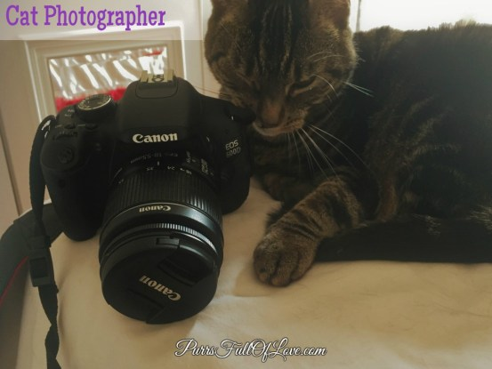 cat photographer