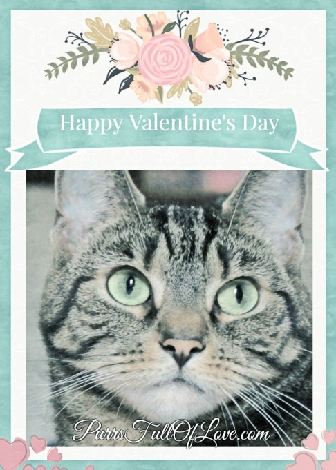 Caturday Art Valentine's Day Winter