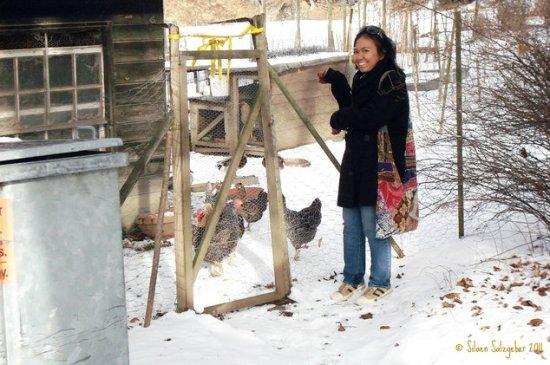 Ayam-ayam peliharaan bapak pemilik kontrakan