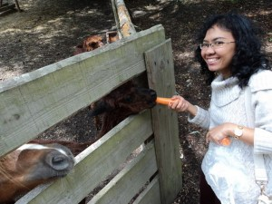 Feeding baby Lama