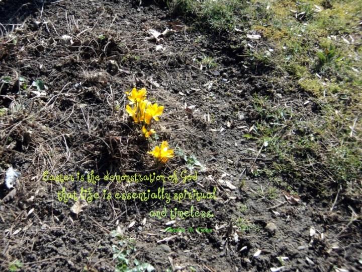 Bunga Krokusse. (Foto: dok. pribadi)