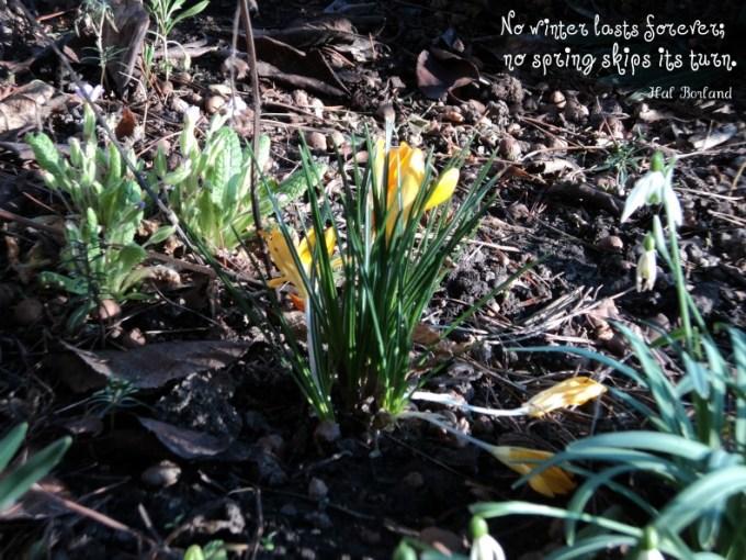 Bunga Musim Semi. Frühlingsblumen. (Foto: dok. pribadi)