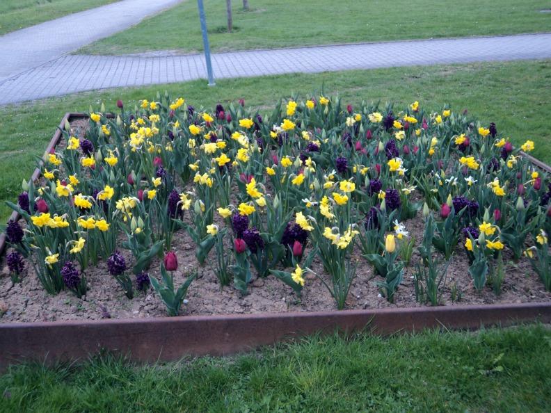 Bunga-bunga Cantik musim semi
