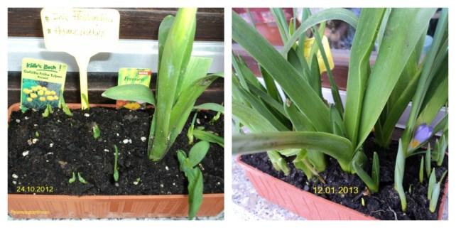 Bunga Campur Sari ada tulip Kuning, Freesien, Hyanzint dan Bunga Iris