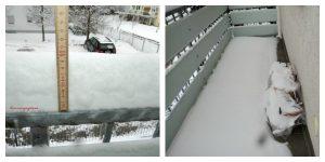 Tebal Salju di Balkon Sudah 10 cm. Foto Kanan Dua POt Tulip Masih di luar, Bagaimana Keadaannya