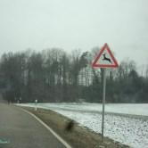 Hati-hati Gerombolan Rusa Kadang Menyebrang Jalan