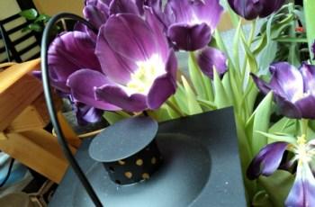 tulip ungu yang cantik