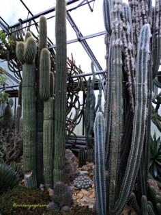 Koleksi kaktus Raksasa Wilhelma Stuttgart1