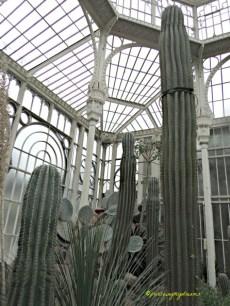 Kaktus Raksasa di Wilhelma Stuttgart