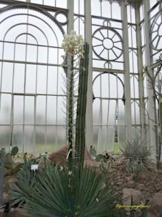 Ruangan Kaktus