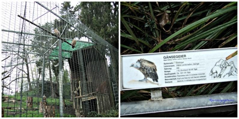 Burung Pemakan Bangkai. Griffon Vulture. Gänsegeier. Wilhelma Stuttgart