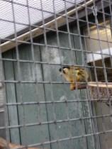 Lagi Hujan, monyetnya senang ngumpet menghangatkan diri