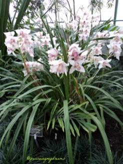 Tanaman Palem ada bunganya toh. Zwerg Zuckerpalme asal Jepang