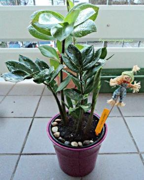 Jangan biarkan tanaman hias debu