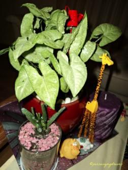 Cantik ya tanaman kuping gajah mini. Syngonium Podophyllum White butterfly