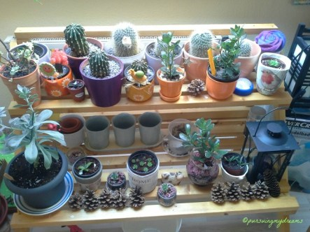 Bagian Belakang koleksi anakan Kaktus