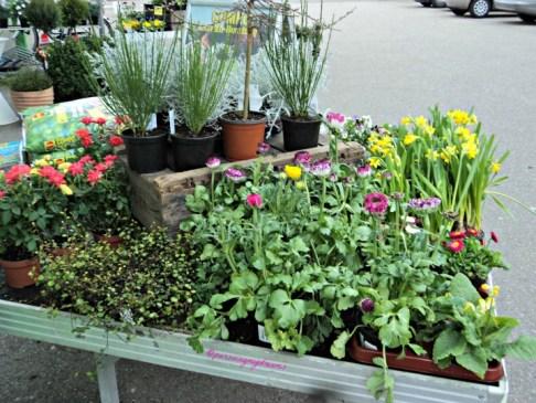 Bunga-bunga yang di pajang di depan pintu masuk supermarket tanaman