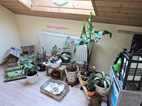 My Houseplants