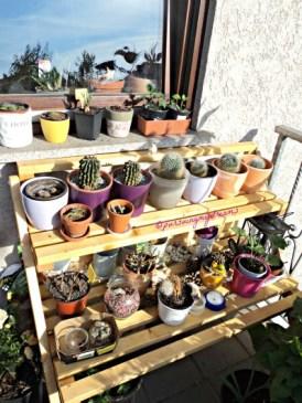 Rak Bunga ini tadinya dalam rumah, taruh luar karena suhunya sudah 30 an derajat, ternyata dingin lagi semoga kaktus-kaktusnya tahan
