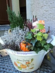Ini sebenarnya tanaman untuk hiasan musim gugur, beli Nov atau Des tahun lalu. Berhub masih bertahan ya sampai musim panas tetap dipajang aja