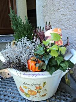 Ini sebenarnya tanaman untuk hiasan musim gugur, beli Nov atau Des tahun lalu