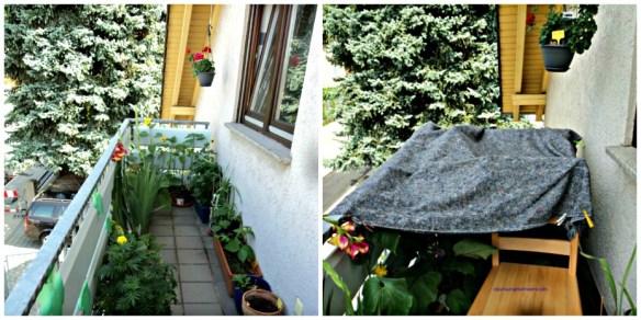 Balkon Depan, panas sekali mulai jam 2 siang hingga jam 6 sore, jadi saya beri pelindung seperti di foto